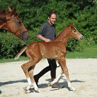 Elevage chevaux de dressage