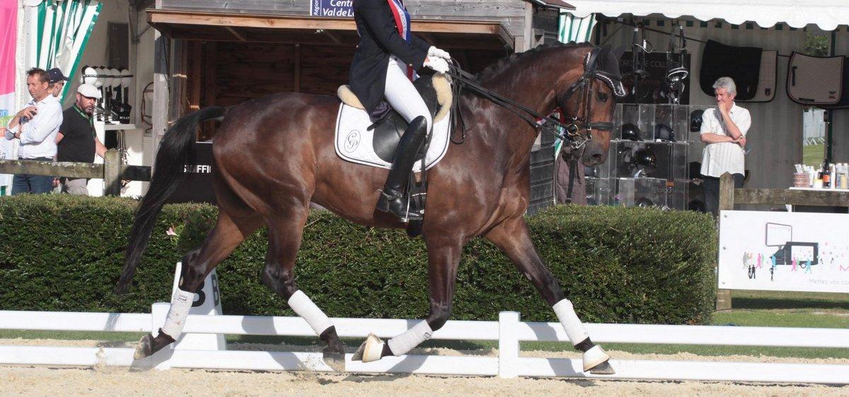 cheval de dressage a vendre