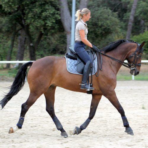 cheval dressage vendre