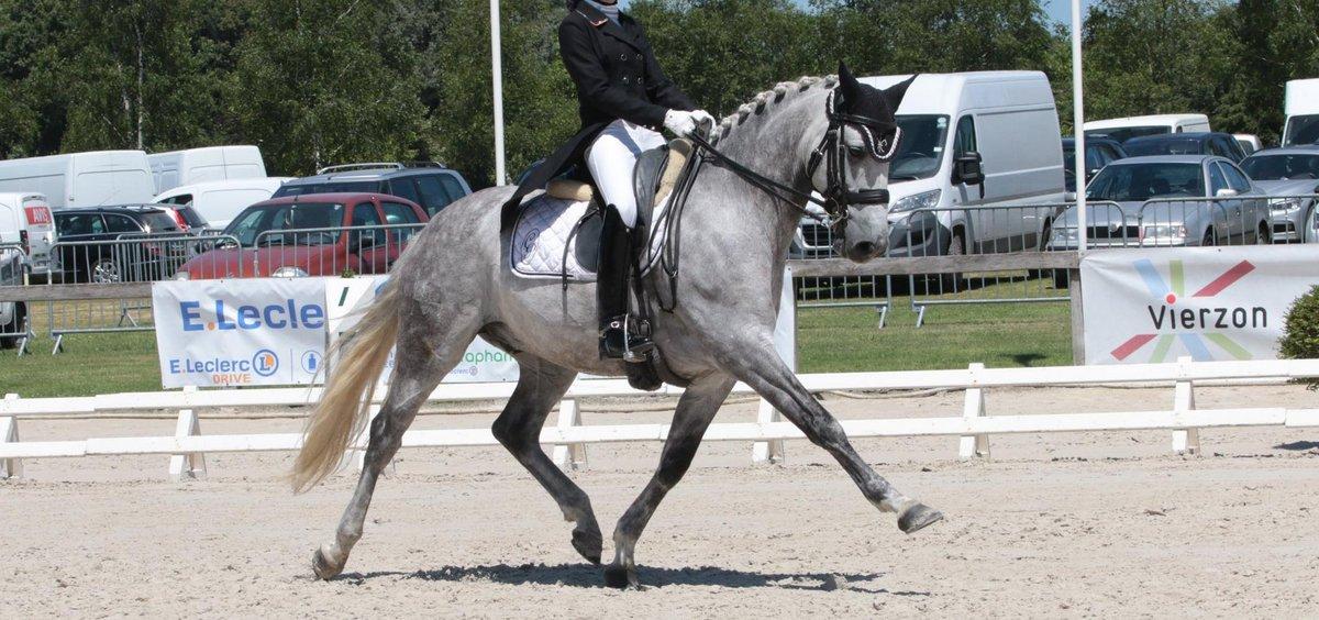 scapin-cheval-niveau-grand-prix-en-vente-2