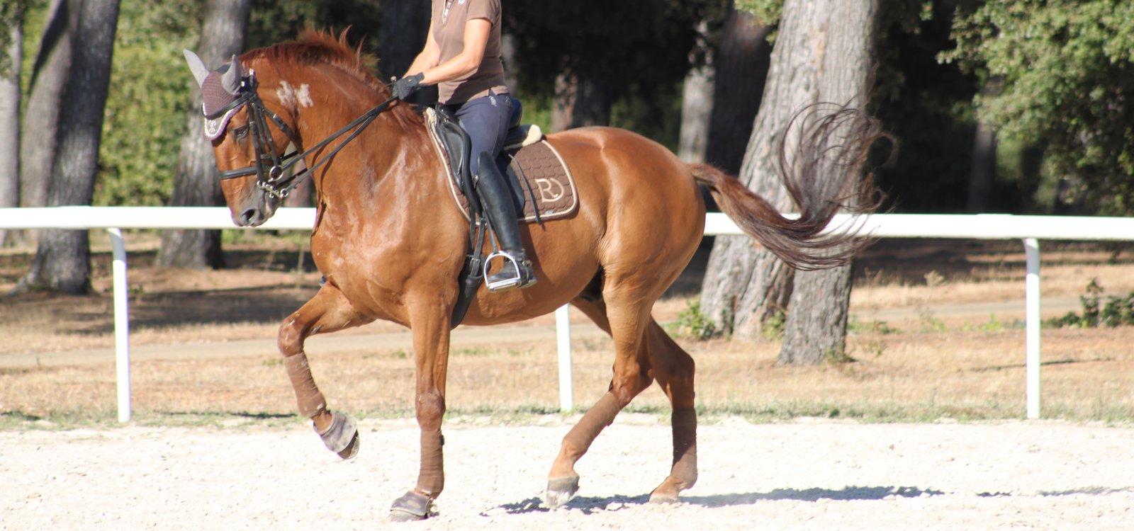 chevaux-dressage-darwin-de-pic-7