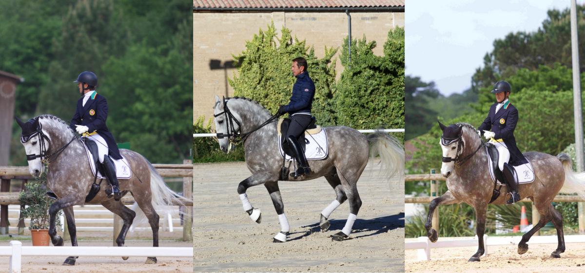 chevaux-dressage-a-vendre-sultao-de-la-gesse-niveau-grand-prix-1