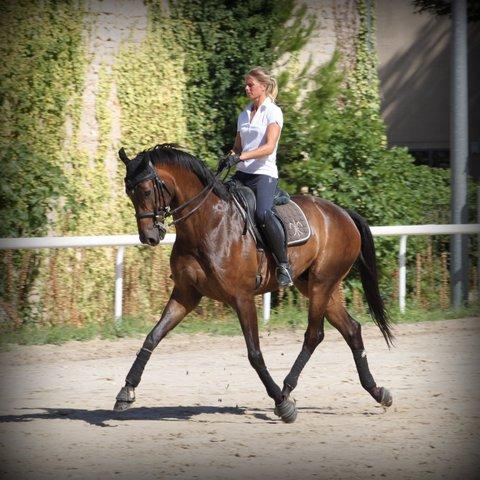Cours sur chevaux dressés