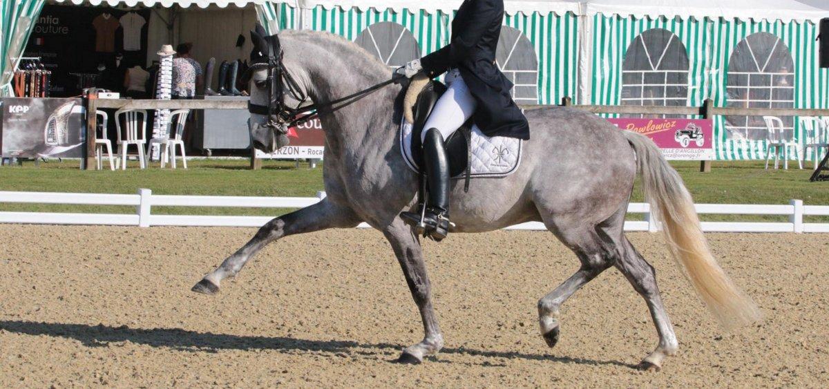 Chevaux Dressage A Vendre Scapin Du Coussoul De La Gesse Pole Equestre Isabelle Et Carlos Pinto Aix Marseille 13